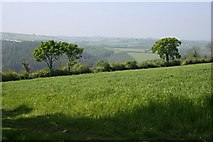 SX3477 : Silage Grass by Tony Atkin