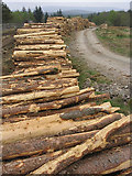 NX6686 : Log piles by Walter Baxter
