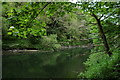 SN1942 : The river Teifi, Cilgerran by Philip Halling