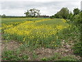 SP8817 : Oilseed rape in flower, view to Alnwick Farm by David Hawgood