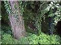 SJ6645 : Stream near Mill Plantation by Ian Bottomley