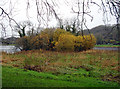 R6441 : Bolin Island on Lough Gur by deiseal