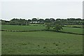 SW8639 : Looking across lush grass fields towards Philleigh by Fred James