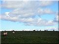 SM9833 : Sheepy skyline by ceridwen