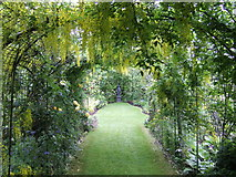 S8735 : Laburnum arch at Coolaught Nursery Garden by Jonathan Billinger