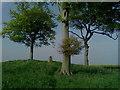 SE8450 : Newcoat Fields Trig point by Siobhan Brennan-Raymond