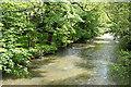 SX3488 : Werrington: river Tamar by Martin Bodman