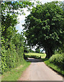 SO6223 : Country lane at Weston under Penyard by Pauline Eccles