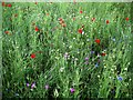 SK5244 : Wild flower show by Lynne Kirton