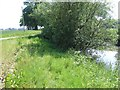 TG0622 : Pond Beside Fir Lane by Ian Robertson