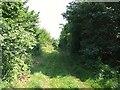 TL2157 : RUPP through Hall Lane Plantation. by Jeff Tomlinson