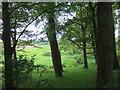 SM9219 : Knock Brook through trees by ceridwen