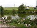 SD7611 : Pond, Meadow Croft by liz dawson