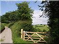 SX3275 : Lane near Exwell by Derek Harper