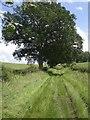 TF9335 : Green lane from Little Walsingham to Great Snoring by Nigel Jones