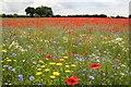 SK8769 : Wildflower meadow by Richard Croft