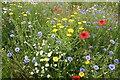 SK8769 : Wildflowers by Richard Croft