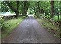 NS7183 : South From Craigannet by Derek Ferris