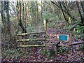 SX4762 : Start of the Footpath through Blaxton Woods by Tony Atkin