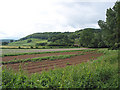 SO6221 : Potato field on Pontshill to Coughton road by Pauline Eccles