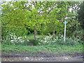 SP7128 : Footpath near Steeple Claydon 2 by Andy Gryce