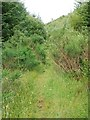 NR8793 : Overgrown forest track by Patrick Mackie