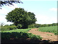 SX2166 : Potato field near Bokenna by Jonathan Billinger