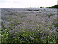 TA2032 : Sea of Borage by Andy Beecroft