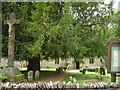SP6235 : Yew tree St Augustine's church by sheral wood