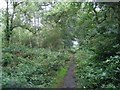 SJ8069 : Path through Big Wood by David C Brown