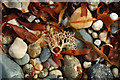 SW5031 : Pebbles on a Cornish beach by Mari Buckley
