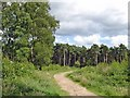 SJ5271 : Manley - view along the Sandstone Trail by Mike Harris