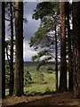 SU1802 : View from the pines, Kingston Great Common, New Forest by Jim Champion