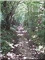 SU9091 : Footpath through beech coppice by David Hawgood