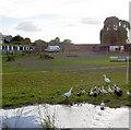 SE4105 : Duck pond. by Steve  Fareham