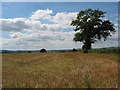 SO5325 : Stubble field with single oak near Gillow Farm by Pauline Eccles