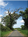 TG0629 : Ancient oak on the way to Thurning by Zorba the Geek