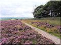 SE0436 : Worth Way footpath on Brow Moor by David Spencer