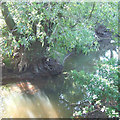 SO5892 : The River Corve, Shropshire by Roger  Kidd