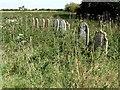 TF3264 : Gravestones, St Andrew's graveyard, Miningsby by Dave Hitchborne