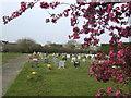 SP6422 : Prunus Blossom and Marsh Gibbon cemetery by Jonathan Billinger