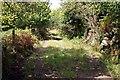 SX0557 : Treffry's Trackbed by Tony Atkin