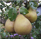 S8735 : A nice pear by Jonathan Billinger