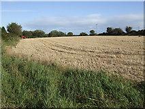 W4981 : Stubble field near Donoughmore by Jonathan Billinger
