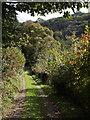 SX3077 : Path into the Inny valley by Derek Harper