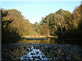SU9584 : Upper Pond, Burnham Beeches by Ray Stanton