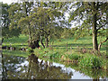 SJ9051 : Grazing Land by the Caldon Canal, Staffordshire by Roger  Kidd
