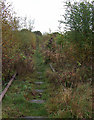 SJ9151 : Disused Railway, Stockton Brook, Staffordshire by Roger  Kidd