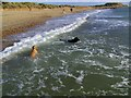 SZ1690 : Hengistbury Head - Dogs Paradise by Maigheach-gheal