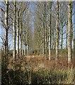 SP7424 : Receding trees by Rob Farrow